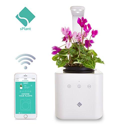 sPlant Smart Fresh Herb Garden Kit, Self Watering Planter, Smart Planter, LED Desk Lamp, Sprout LED, Growing Light, Flower Pot, Smart App Remote Control, for Home/Bedroom/Kitchen/Office Decoration from sPlant