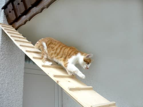 Elmato - Escalera de Gato (3 m): Amazon.es: Productos para mascotas