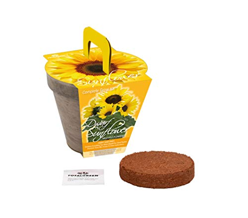 Quality Sunflower Grow Kit | Grow Your Own Unique Dwarf Sunflower from Seed in Just A Few Weeks | Unique Basalt Pot, Non-GMO Mother's Day Gardening Kit with Easy Instructions | by TotalGreen Holland (Image #1)