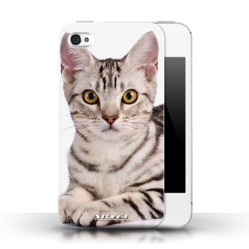 Etui / Coque pour Apple iPhone 4/4S / American Shorthair conception / Collection de Espèces de chats