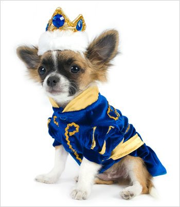 Prince Charming Costume for Dogs - Size 5 (14'' l x 18.5'' - 20.5'' g) by Puppe Love