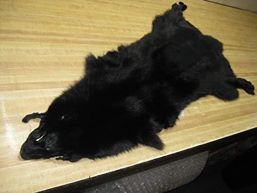 Blue Fox Dyed Black # 1 -