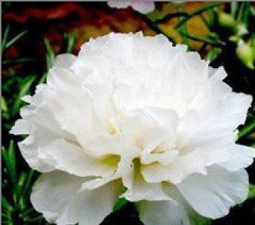 1000 flower petals - 6