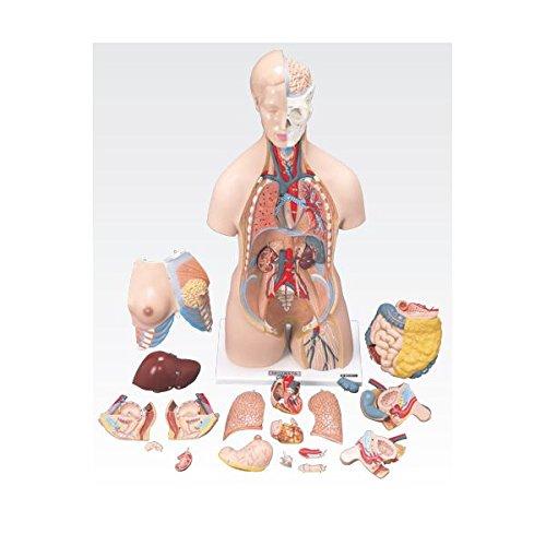 トルソ人体模型/人体解剖模型 (20分解) J-112-0   B077JG741J