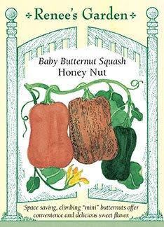 Butternut Squash 'Honey Nut'