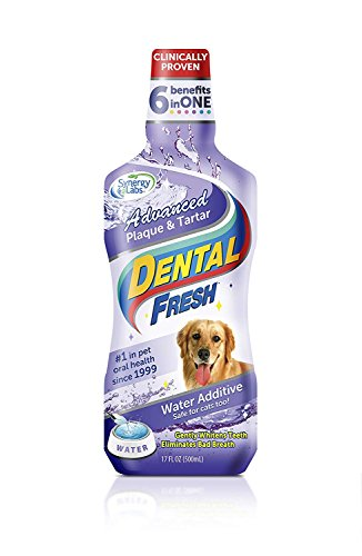 SynergyLabs Dental Fresh Advanced Plaque and Tartar-17 Oz