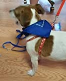 All American Dog! Medium Size Patriotic Bundle - 4 Items: One 2 Piece Red White and Blue Harness (Medium Size) and Leash Set, One Matching All American Bandana Neckerchief, One Multi-color Flashing Harness Light with Star Decor (Medium 14-20 Inch Chest)