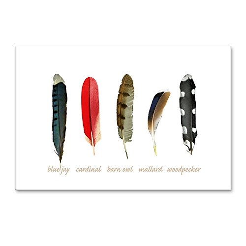 - CafePress - Nature Art Bird Feathers - Postcards (Package of 8), 6