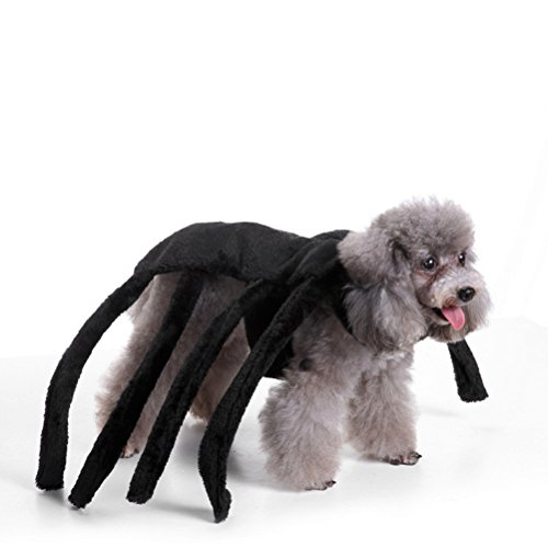 Dog Spider Suit (Halloween Pet Small Dog Cat Spider Harness Costume for Teddy, Pug, Chihuahua, Shih Tzu, Yorkshire Terriers, Papillon Black A-Black)