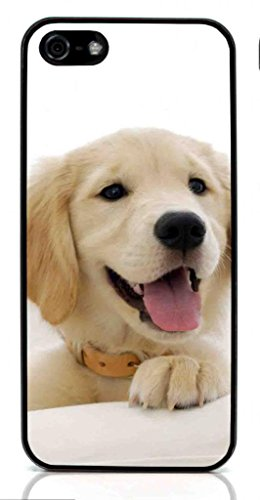 Golden Retriever Dog Hard Case for Apple iPhone 5/5S ( Sugar Skull )