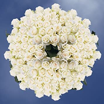 Amazon Globalrose 250 Fresh Cut White Roses With A Creamy