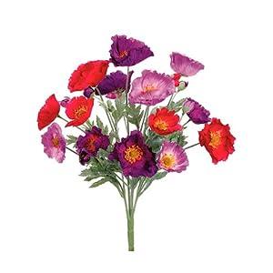 """21"""" Poppy Bush x20 Purple Beauty (Pack of 12) 108"""
