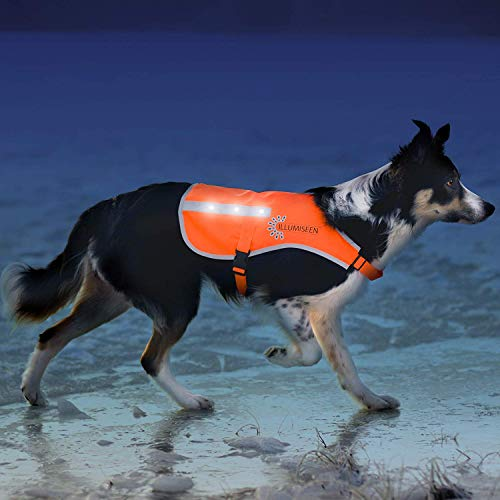 Illumiseen LED Dog Vest | Orange Safety Jacket with Reflective Strips & USB Rechargeable LED Lights | Increase Dog's Visibility When Walking, Running, Training Outdoors (Large, Orange) (Vests Lights Safety)