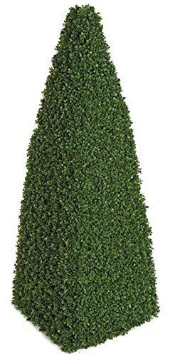 4 Foot Boxwood Pyramid Topiary Signature Foliage