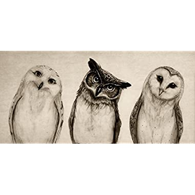 Shakaka The Owls 3 Canvas Wall Art For Home Decoration Canvas Print - 16x 12
