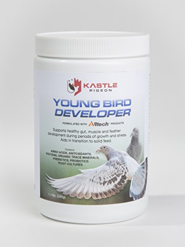 Young Bird Developer Plus Pigeon Probiotics, Antioxidants, Amino Acids, and Trace Minerals for Naturally Healthy Pigeons Without Medicine