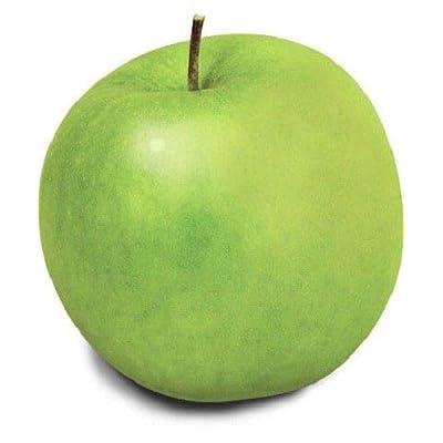 40 Seeds: USA Heirloom Organic Granny Smith Apple Tree 10-80 Seeds : Garden & Outdoor