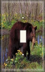 (Single Switch Plate OVERSIZE - Bear In The)