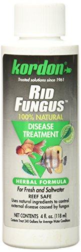 KORDON  #39844  Rid Fungus for Aquarium, 4-Ounce by Kordon