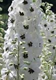 25 White Magic Fountains Dark Bee Delphinium Flower Seeds Perennial