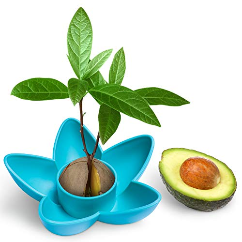 HENMI Avocado Seed Tree Growing Kit, Avocado Planting Bowl Plant Indoor Garden Seed Starter Gift Practical Gardening Gifts Kitchen Gifts for Women, Blue