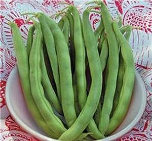 Bean, Polo Kentucky Wonder semillas, orgánico, no GMO, 200 semillas por paquete