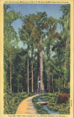Longwood Florida (Longwood, Florida Postcard)