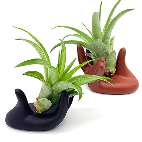 2 Pcs Small Clay Air Plant Stand Pot Art Hand Shape Holder Fuego Planter Lonantha Tillandsia Plant Display Racks, Live Tropical House Plants for Tabletop, Home Decor-Indoor Air Plants (Black&Red)