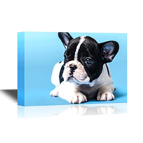 french bulldog frame - 9