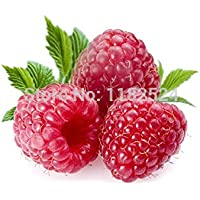 3000+ Red GIANT RASPBERRY Seeds Rasp Berry Seed Super Big Fruit Seed StrawBerry Seeds