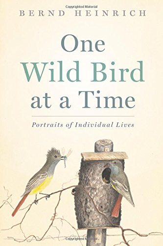 one-wild-bird-at-a-time-portraits-of-individual-lives