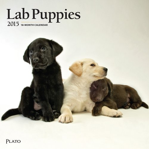 2015 Lab Retriever Puppies Wall Calendar BrownTrout by BrownTrout