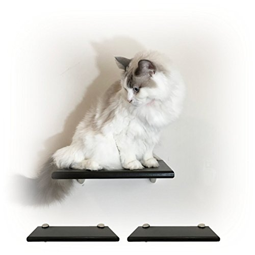 Contempo Floating Cat Shelf 12' (Set of 2) by Purrfectly Catastic | Handcrafted Wall-Mounted space saving cat climbing activity tree steps shelves furniture | Choice of wood finish