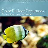 Colorful Reef Inhabitants - Fishes, Anemones and more 2020: Tropical reefs provide a wide variety of animals and colors (Calvendo Animals)