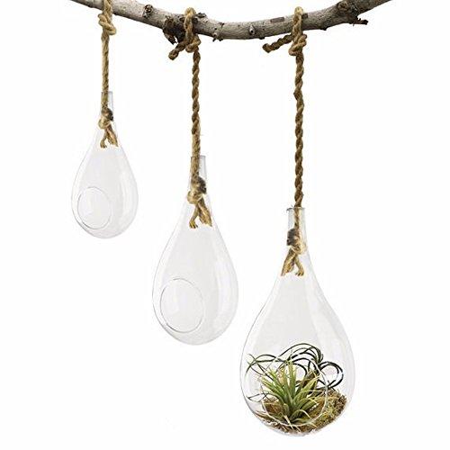 Set of 3 Glass Teardrop Plant Terrariums Held By Rope Han...