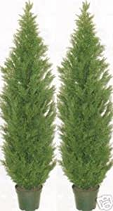 Amazon.com - Two 5 Foot Artificial Topiary Cedar Trees Potted ...