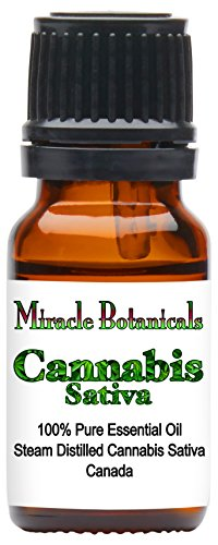 Miracle Botanicals Cannabis Sativa Essential Oil   100  Pure Cannabis Sativa   Therapeutic Grade   10Ml