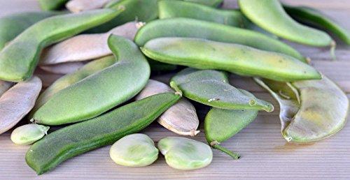 - 40 Seeds of Henderson Lima Bush Bean Seeds Non-GMO