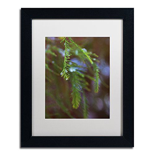 "picture of Trademark Fine Art Ice Droplets on Redwood Tree Foliage Wall Decor by Kurt Shaffer, 11"" x 14"", Black Frame, White Matte"
