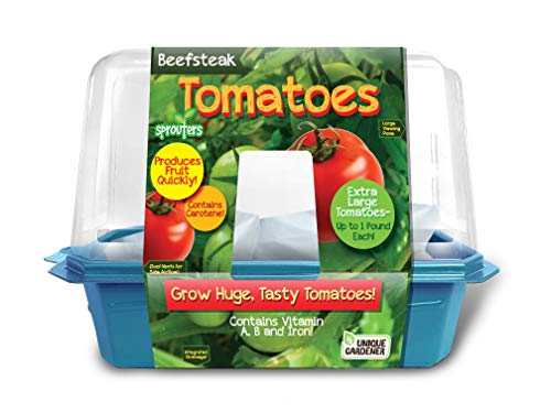 Grow Your Own Tomato Plants - Everything You Need to Sprout Fresh Extra Large Juicy Tomatoes - Each Can Weight Up to 1 Lb