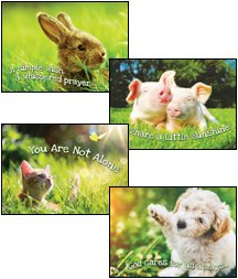 Fur Baby Love - KJV Scripture Greeting Cards - Boxed - Encouragement