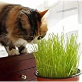 100 Particles Foliage Plant Seeds Wheat Grass Cat Grass Seeds Wheat Seeds(Cats like to eat grass)