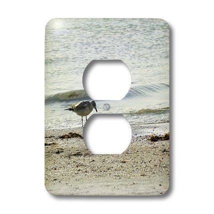 3dRose LLC lsp_37424_6 Bird with Fish On Sanibel Beach, 2 Plug Outlet - Sanibel Outlet