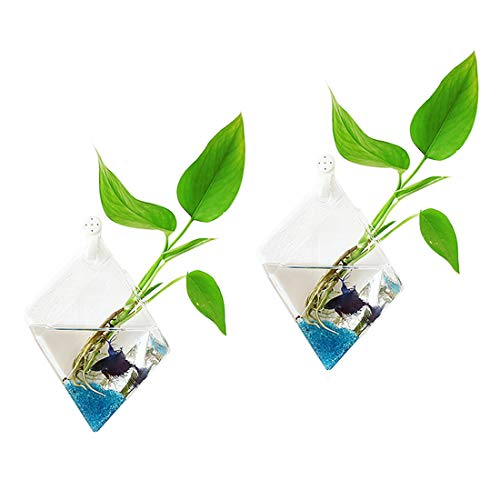 Ivolador 2PCS Wall Mount Hanging Glass Plant Terrarium Diamond Shape Perfect for Propagating Hydroponic Plants Home Garden Wedding Decor