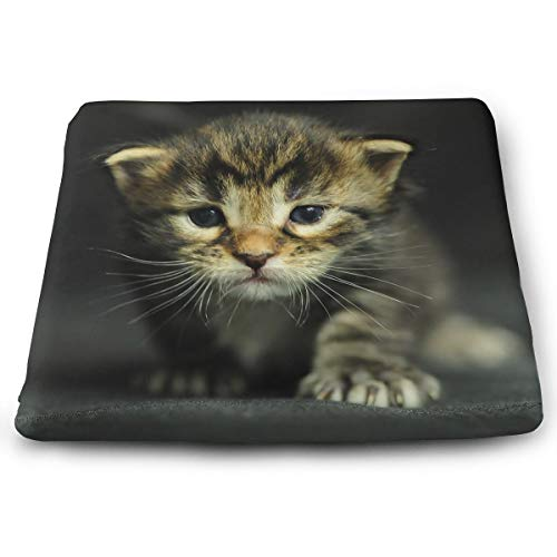 Comfortable Seat Cushion Chair Pad Cats Kittens Dressed Up Perfect Memory Foam Cushions Lighten The -