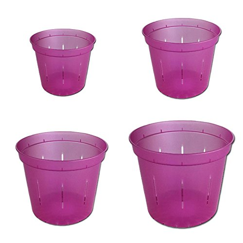 Slotted Clear Orchid Pots - Growers Assortment (8 pots 2 each, Wild Orchid)