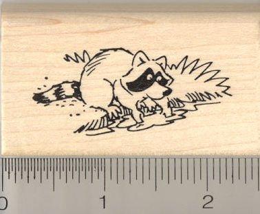 Amazoncom Raccoon Washing Food Rubber Stamp Everything Else