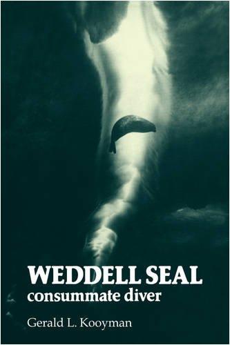 Weddell Seal: Consummate Diver