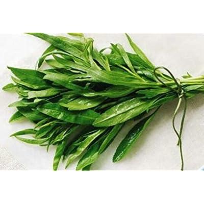 400 Seeds Fresh Tarragon Herb Annual Plant Herb Seeds #SPM : Garden & Outdoor