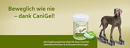 Canigel Gelita 500gr | Gelatina Hidrolizada para Perros y Gatos | Condroprotector Natural usado por los mejores criadores: Amazon.es: Productos para ...